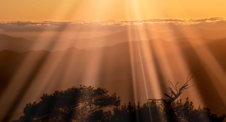 Bright sun rays on the mountains and silhouette of pine tree at sunset . troodos mountains cyprus