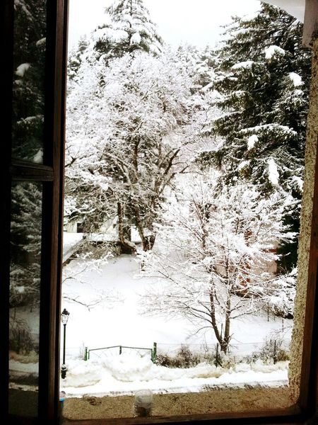 The View From My Window Cold Winter ❄⛄ Snow ❄ Cold Temperature Montain Collection Canfranc Be Happy Trees Trees Collection Close-up Popular Inspirational Moment Live For The Story Perspective