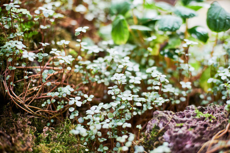 Gardens By The Bay Plant Growth Selective Focus Beauty In Nature Flowering Plant Flower Day Nature Freshness No People Vulnerability  Fragility Close-up Land Outdoors Field Leaf Plant Part Tranquility Green Color Flower Head Purple Lilac Lichen