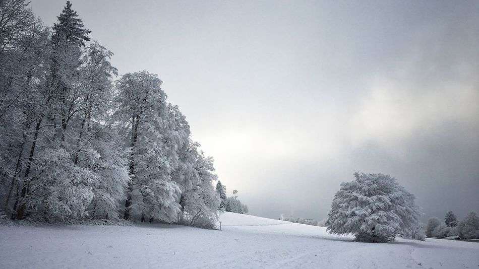 Snow Winter Cold Temperature Weather Tree Beauty In Nature Deep Snow Nice View White Color Taking Photos First Snow