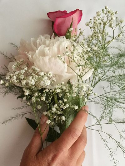 Cropped hand holding flower