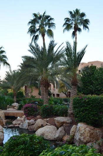 Hotel View Totes Meer Travel Destinations Traveling Spa Jordan Middle East Hotel Jordan Jordanien Vacations Moevenpick Vacation Palmtree Palmen Palms