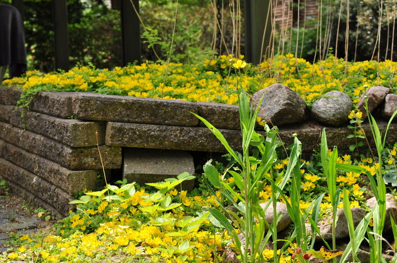 Bricks Garden Garden Photography Plant Ruins Stone Wild Yellow Flower Spontaneous Moments Small Flowers Daylight Simple Photography Beauty In Nature Peaceful