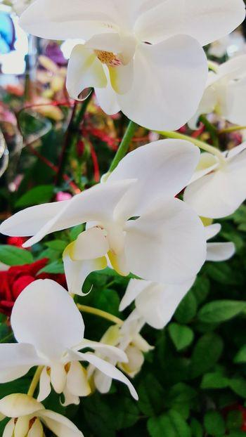 Spring Design Spring Idea Spring Into Spring Spring Flowers IKEA Ikea Design Ikea♥ Ikeacanada Ikea Decor Homedesign Homedecor Orchids Garden Orchids