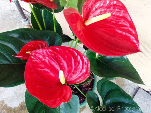 Flower Flowers Plant Plants