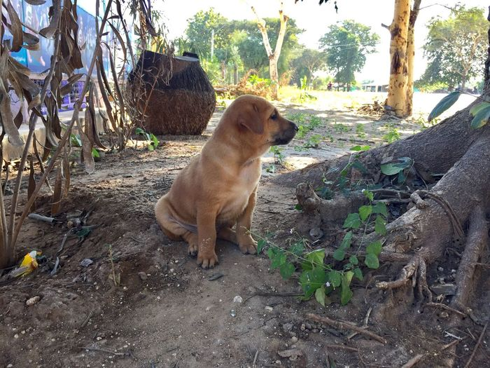 Dog Pets Domestic Animals Mammal Animal Themes Plant Tree Leaf No People One Animal Nature Outdoors Day