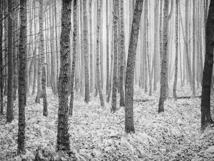 Rainy morning Showcase April Open Edit Blackandwhite Bw_collection Forest Fine Art Photography Black And White Black And White Photography Nature's Diversities Monochrome Photography
