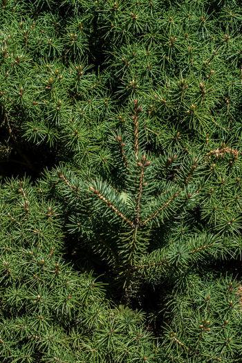 Full frame shot of branches