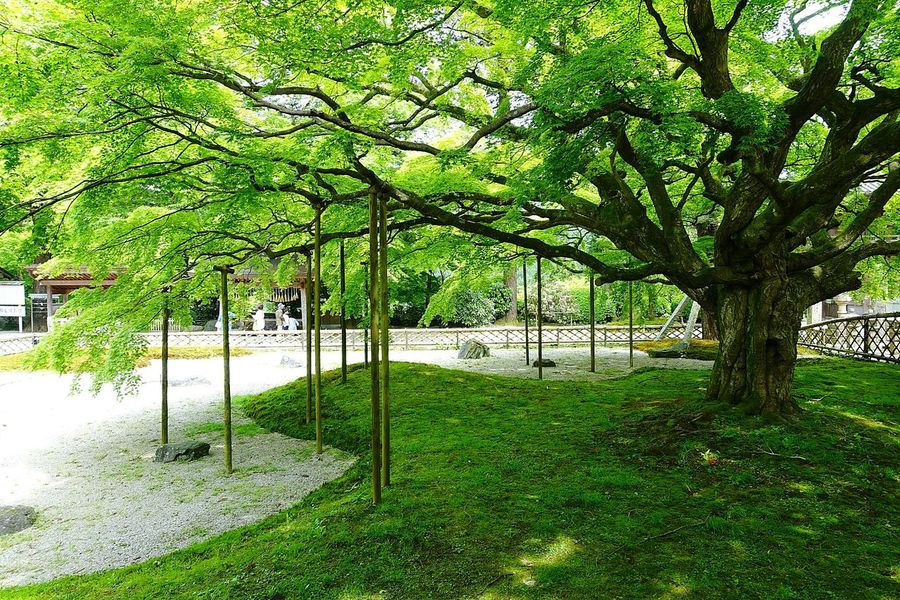Japanese Temple Japanese Garden Garden Garden Photography Tree Trees Green Green Green Green!  Green Color Nature Nature_collection Japan Fukuoka,Japan Itoshima Japanese Culture Nopeople Nature Photography 糸島 Itoshima City EyeEm Nature Lover EyeEm Best Shots