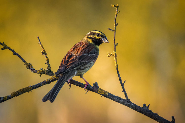Bird Animals In The Wild Animal Wildlife Perching Animal Themes Animal One Animal Vertebrate Branch Focus On Foreground Tree Plant No People Twig Nature Day Outdoors Close-up Beauty In Nature