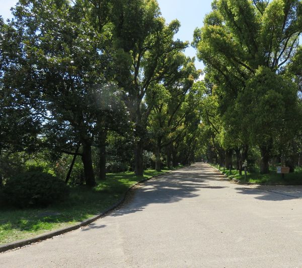 風景 街路樹 並木道 道 みち