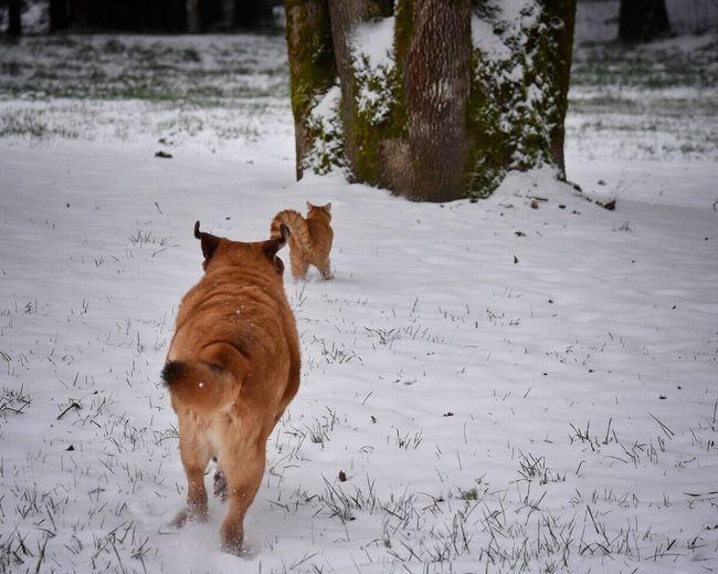 Pets On Snowy Field