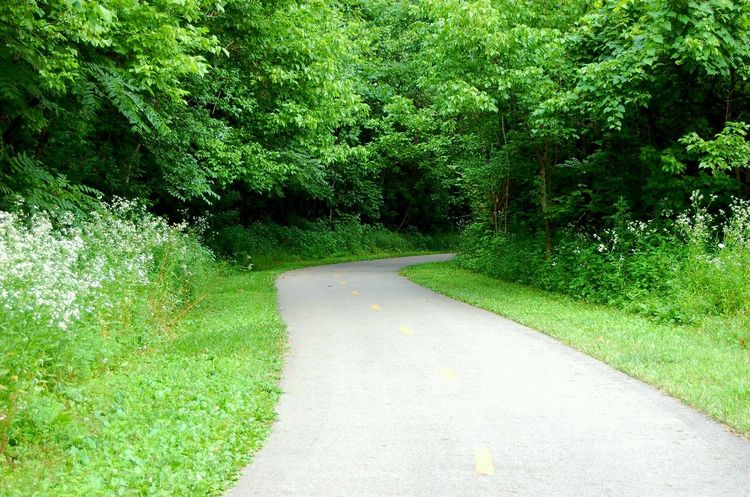 Nature Photography erNature aFlowers,Plants & Garden No People Tree_collection  Green Trees And Nature Green Color Woods Paved Path Bike Path