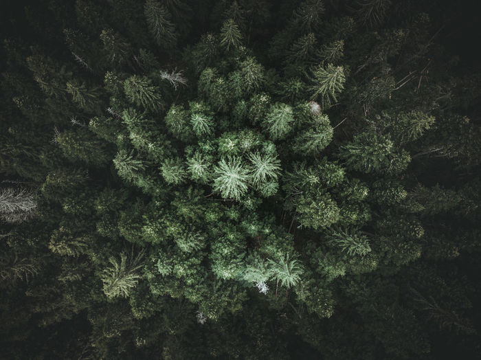 Aerial view of trees