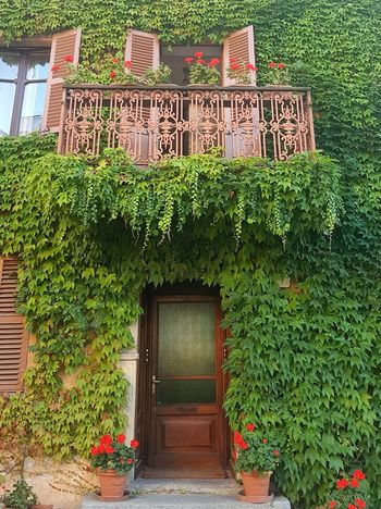 Plant Architecture Green Color Growth Built Structure No People Day Ivy Flower Tree Building Exterior Outdoors Nature Textures And Surfaces Alta Langa Langhe Italy Old House Old Door