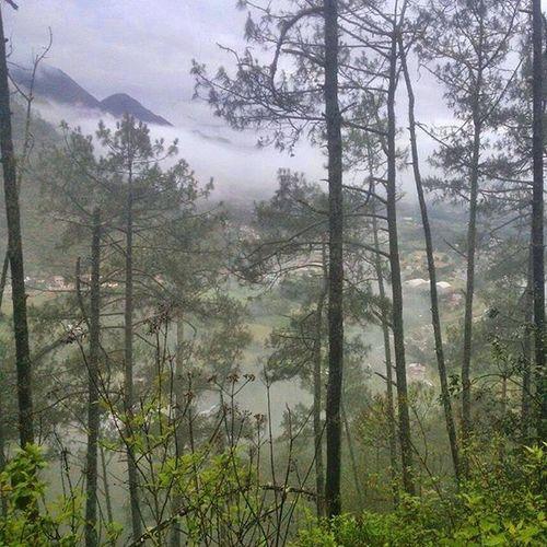 Mexico Forest Travel Landscape Mextagram Mist Mountain Tree Naturalovers