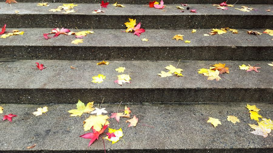 Autumn Steps Stairs Leaves Leaves On The Ground Nature Outdoors Concrete Concrete Steps Fall Fallen Leaves Red Leaves Yellow Leaves Walking Walking Around The City  Fall Collection Fall Beauty Street Photography No People Gray Colorful Leaves Surfaces Naturelovers