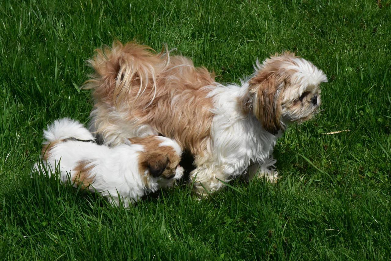 HIGH ANGLE VIEW OF DOGS ON GRASS