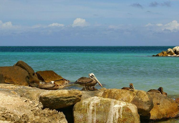 Natgeoyourshot Natgeotravel Natgeo Aruba Nature Photography Nature Sea Water Rock Sky Horizon Over Water Solid Rock - Object Horizon Cloud - Sky Beauty In Nature Scenics - Nature Beach Nature Tranquility Land No People Tranquil Scene Animal Wildlife Day