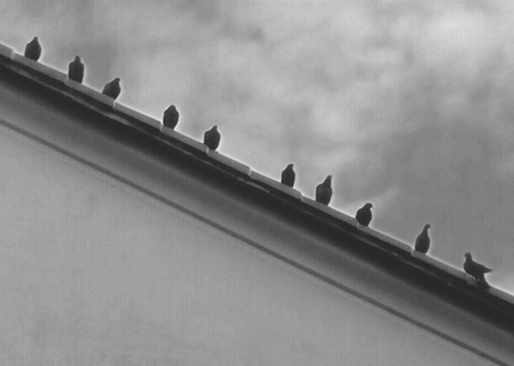 Birds Canon 70d Canonphotography Photography Fotoavilo Toirano Birds🐦⛅ Robertooliva Avilo