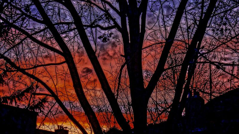 Autumn Sunset 8150 Feet Above Sea Level And Then Some... Vail Colorado Bare Tree Beauty In Nature Branch Day Low Angle View Nature No People Outdoors Scenics Silhouette Sky Sunset Tree Vail  Vail,co