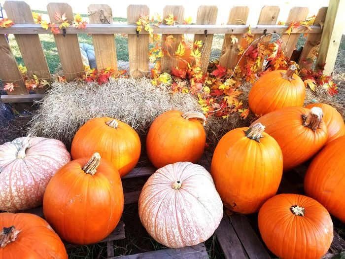 pumpkins EyeEm Selects Pumpkin Vegetable Abundance Orange Color For Sale Food And Drink No People Large Group Of Objects Outdoors Freshness