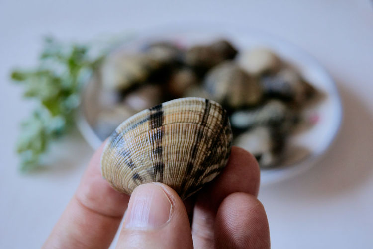 Close-up of person holding shell