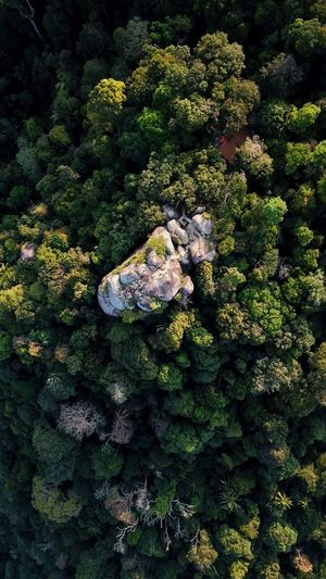 Gunong Datuk Rembau Aerial View Aerialphotography EyeEm Selects Topdown Eyebird Mavicpro Growth Plant Green Color Nature No People High Angle View UnderSea Beauty In Nature Outdoors Sunlight Tree