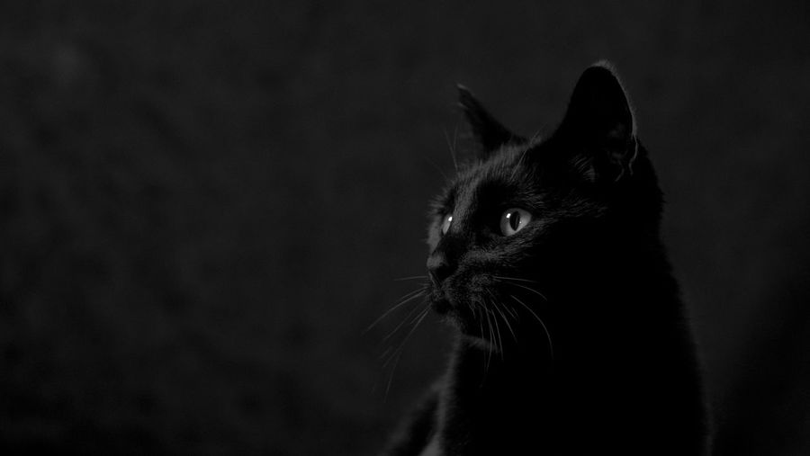 Noodless the Cat Black And White, Black And White Photography, Urban Exploration, Urban Decay, Classic B&W, Vintage B&W, Domestic Animals Domestic Cat Feline Indoors  Mammal No People One Animal Pets Studio Shot Whisker First Eyeem Photo