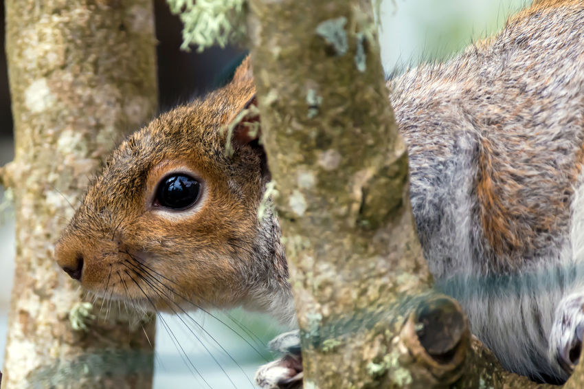 Squirrel or chipmunk in a tree Animal Photography Animal Themes Animals In The Wild Animals In The Wild Brown Chimpmunk Close-up Curious Day Focus On Foreground Fur Mammal Mammals Nature No People One Animal Outdoors Pets Squirrel Tan Tree Wildlife & Nature Wildlife Photography Wildlife Photos Wildlifephotography