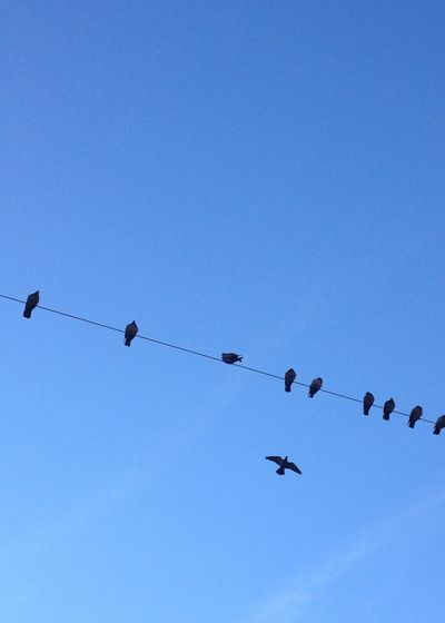 Bedifferent Be Different Think Different Act Freedom l Liberty Fly Learntofly Sky Aligned Leader Solo Lead