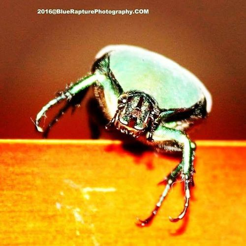 finding bug's with Bluerapturephotography@gmail.com Bluerapturephotography Bugslife Bugs! Bugs And Insects