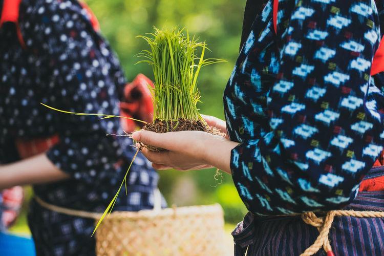 Rice-planting traditional festival in shirakawago