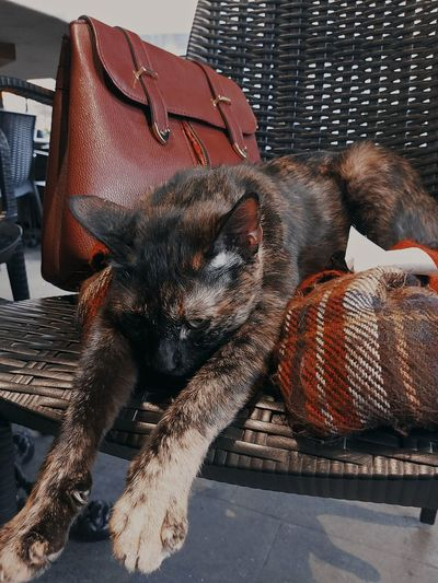 View of a cat resting on chair