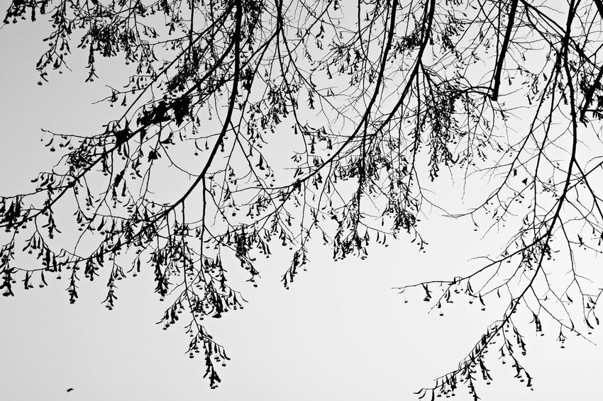 Misty & gloomy day. I Abstract Beauty In Nature Bird Black & White Black And White Blackandwhite Branch Branches Branches And Leaves Branches And Sky Cold Days Day Foggy Gloomy Low Angle View Misty Nature No People Non-urban Scene Outdoors Sky Tree Winter Wintertime Wintertrees