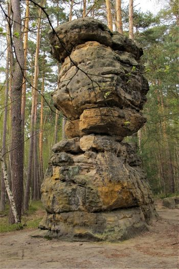 Czech Republic Rock Formation Balance Day Forest Low Angle View Nature No People Outdoors Rock Rock - Object Sandstone Solid Tranquil Scene Tranquility WoodLand