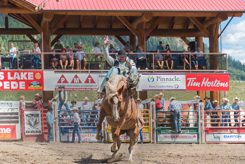 Williams Lake, British Columbia/Canada - July 2, 2016: cowboy fights to stay on bucking horse during a saddle bronc competition at the 90th Williams Lake Stampede, an internationally famous event. 90th Williams Lake Stampede British Columbia, Canada Canadian Professional Rodeo Association Cowboy Event July Rodeo Spectators Travel Audience Bucking Bronco Bucking Horse Country Western Documentary Editorial  Extreme Sport Horse Outdoors Professional Rodeo Saddle Bronc Stampede Stampede Grounds Stands Summer Tourism