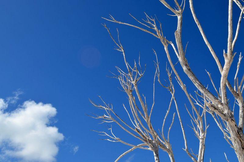 Blue Sky Blue Sky And Clouds