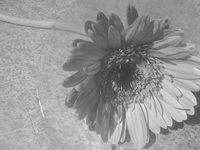 Love what you have before life teaches you to love what you lost . Flowers Blackandwhite Natural