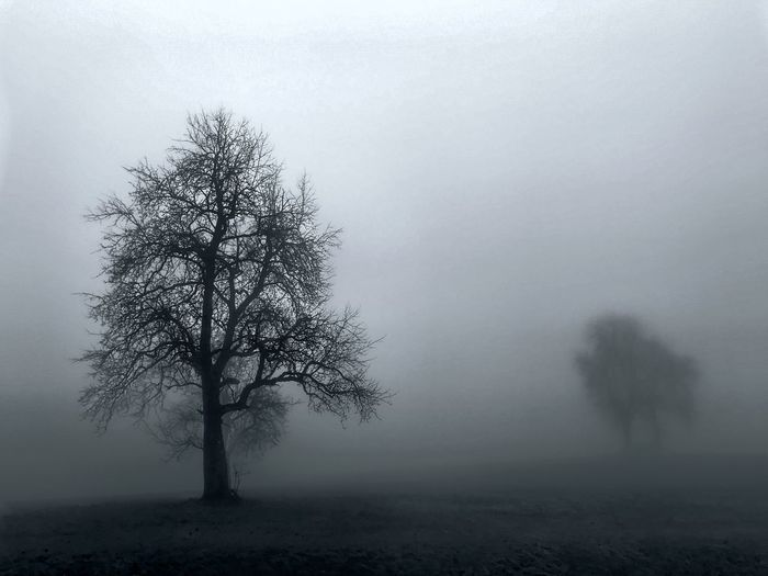 Bare tree on landscape during foggy weather