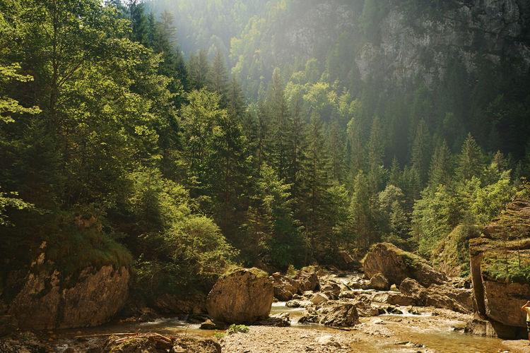 Mountain creek Alpine Cascade Creek Flowing Water Landscape Mountain Nature River Rock Scenics Spring Water Stone Stream Valley Water Waterfall