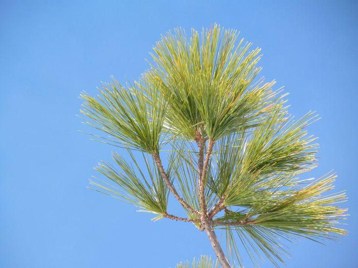 Blue Plant Sky