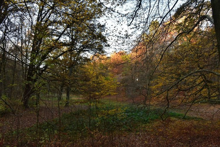 Evening Light Orange Color Autumn colors Sonian Forest Lush Foliage Tree Plant Growth No People Nature Beauty In Nature Tranquility Day Outdoors Sky Branch Forest Land Water Tranquil Scene Green Color Scenics - Nature Non-urban Scene Full Frame WoodLand