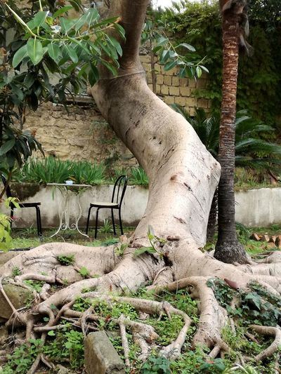 Garden Tree Roots Outdoors No People Nature Table And Chairs A Corner Of Quietness