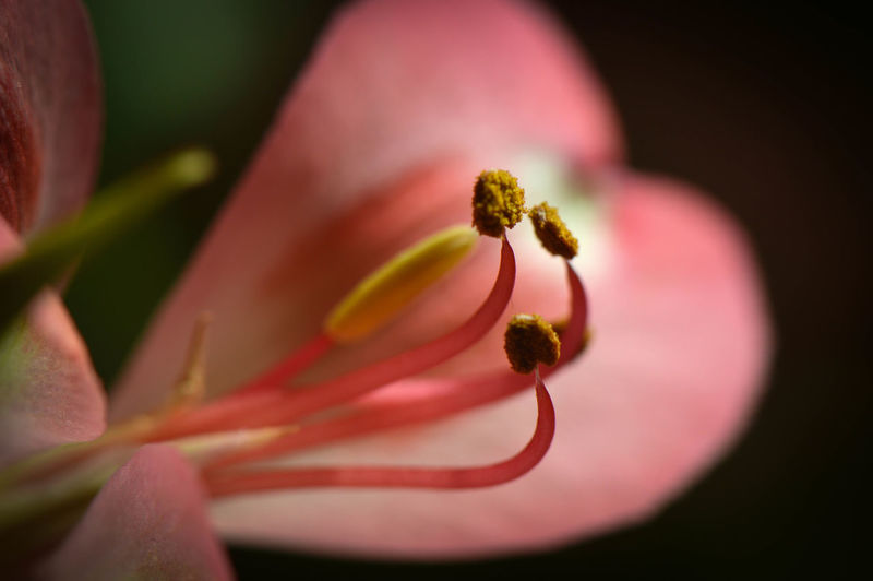 Beauty In Nature Blossom Close-up Day Flower Flower Head Fragility Freshness Growth Nature No People Outdoors Petal Plant Selective Focus Springtime Stamen