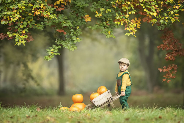 Boy carrying pumpkins on field during autumn