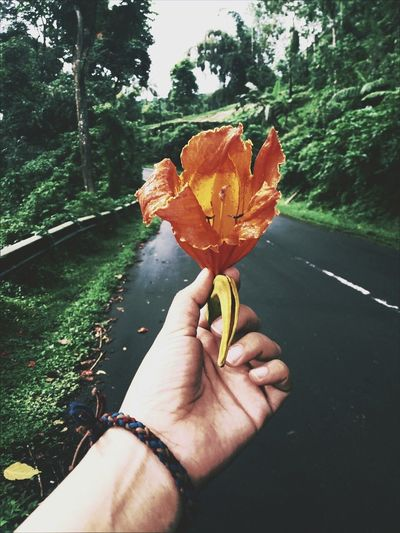 Cropped Hand Of Person Holding Orange Lily On Road