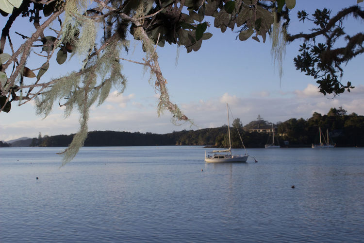 Bayofislands Beauty In Nature Branch Cloud - Sky Day Nature Nautical Vessel No People Outdoors Sailing Sailingvessel, Sailing, Sails, Old Sailingvessel Scenery Scenics Sea Sky Tranquility Transportation Tree Water Waterfront