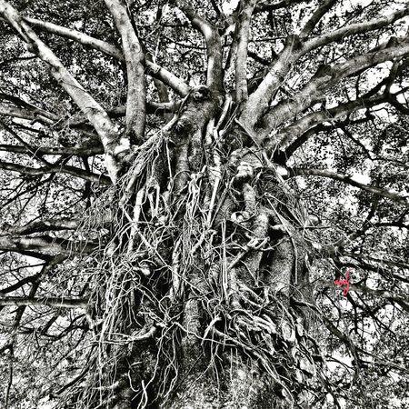 Bom Dia ❤ Foto First Eyeem Photo Secret Garden Mi Amor ♥ Instagram Avare SP BRASIL 🇧🇷☀️ Mumuzinho Natureza 🐦🌳 Boa Noite ✌❤