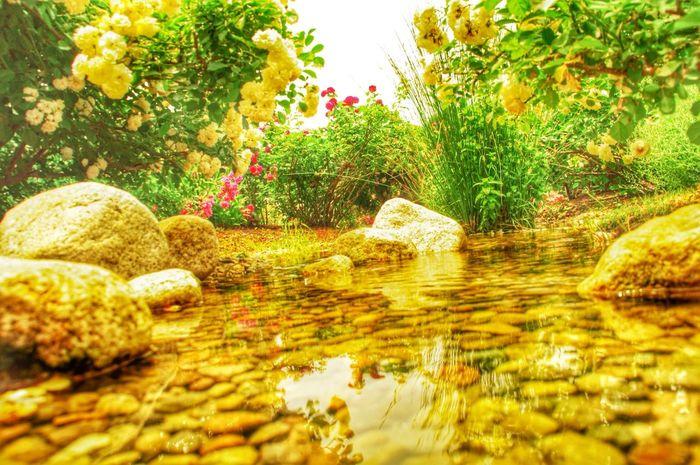 EyeEm Best Shots - Nature EyeEm Best Shots - Flowers